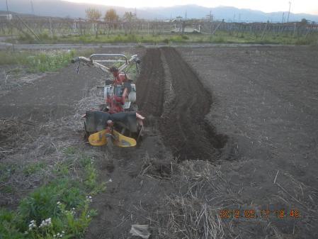 トマト・なすの畝作り