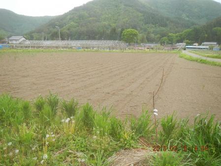 大豆の種まき (2)