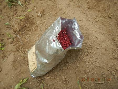 小豆 (1)