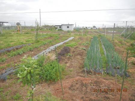 貸し出し農場 (1)