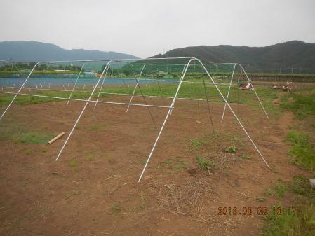 苗の定植作業 (8)