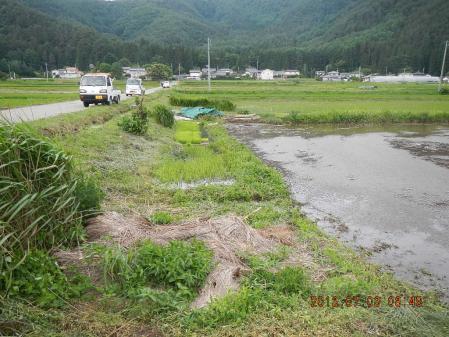 田んぼ (1)