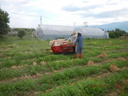 麦刈り (2)