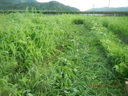 豆畑 (2)