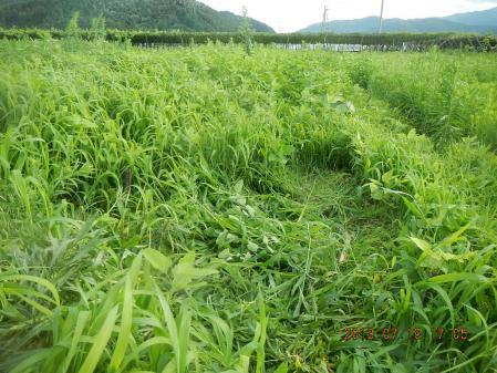 豆畑 (1)