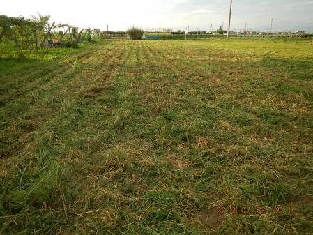 収穫後の整地 (3)