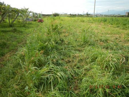 収穫後の整地 (1)