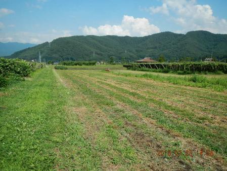 麦刈り後の整地作業 (4)