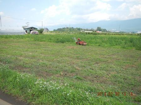 麦刈り後の整地作業 (3)