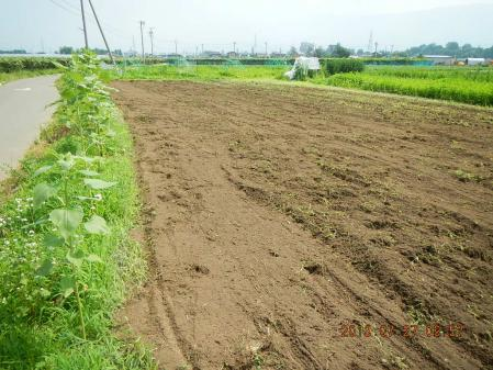 蕎麦畑準備