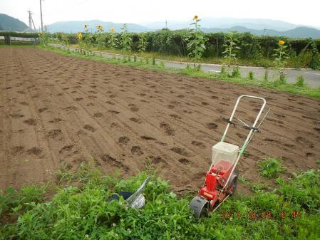 蕎麦の種蒔き (2)