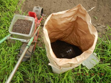 蕎麦の種蒔き (1)
