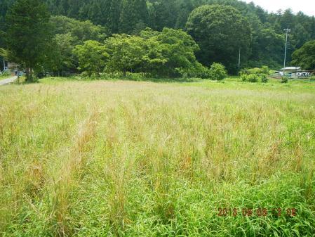 かえで農場の黒麦 (1)