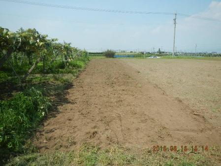 麦畑の整地