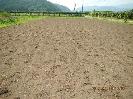 蕎麦種蒔き (2)