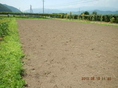 蕎麦種蒔き (1)