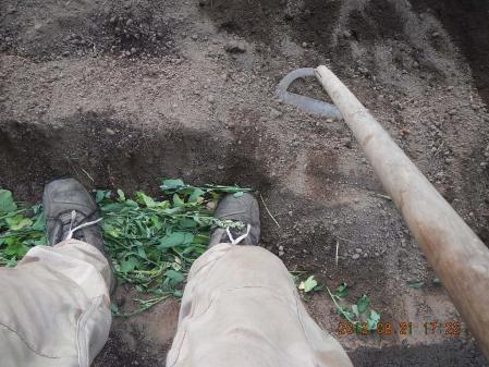 秋蒔き野菜の畝作り (5)