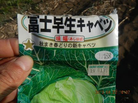 秋野菜の種蒔き (4)