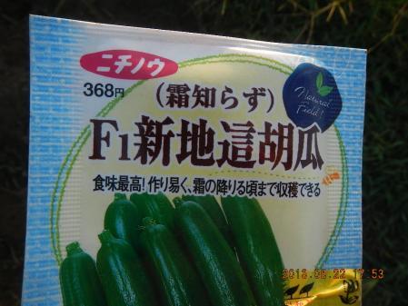 秋野菜の種蒔き (1)