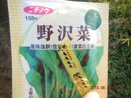 秋野菜の種蒔き (2)