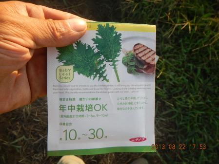 秋野菜の種蒔き (11)