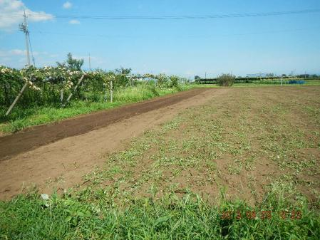 麦畑耕起作業 (5)