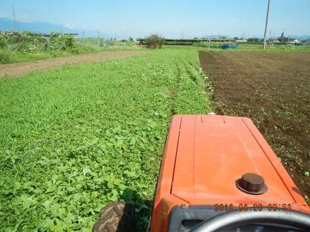 麦畑耕起作業 (3)
