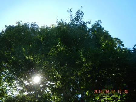 栗・竹下草刈り (4)
