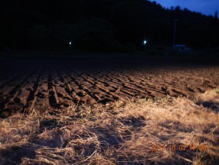 黒麦の種蒔き (4)
