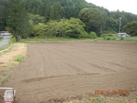 黒麦の種蒔き (3)