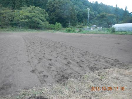 ライ麦の播種 (2)