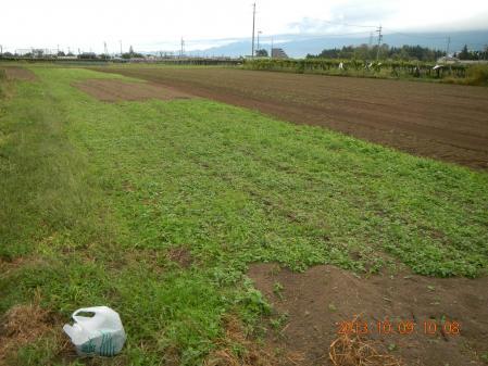 麦畑の耕起作業 (6)