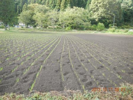 かえで農場 (2)