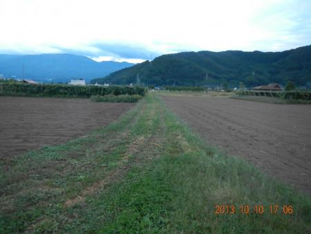 ハナマンテン麦畑