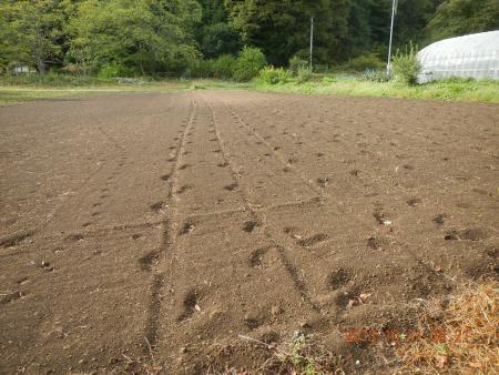かえで農場 (3)