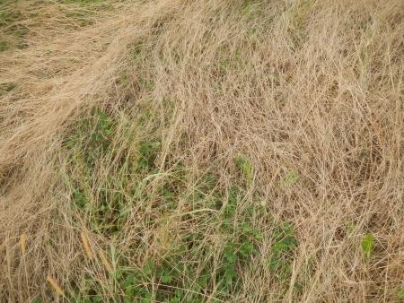 ライ麦畑 (2)