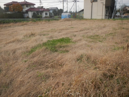 ライ麦畑 (1)