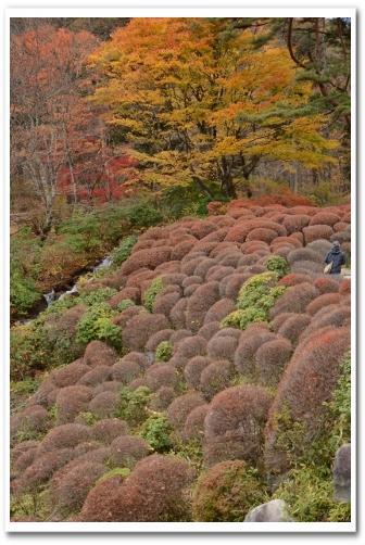 鹿沼の紅葉