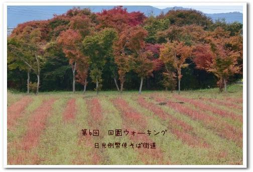 田園ウォ―キング