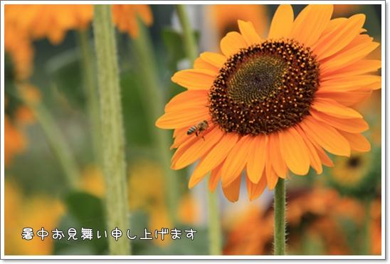 IMG_5736・2