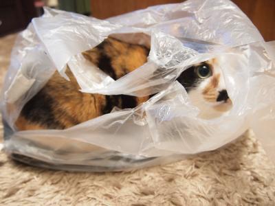 袋の中から・・・