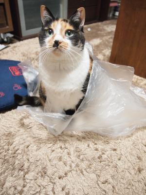 袋好きです。