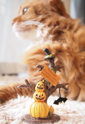 かぼちゃかぼちゃかぼちゃ