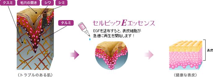 EGFの効果