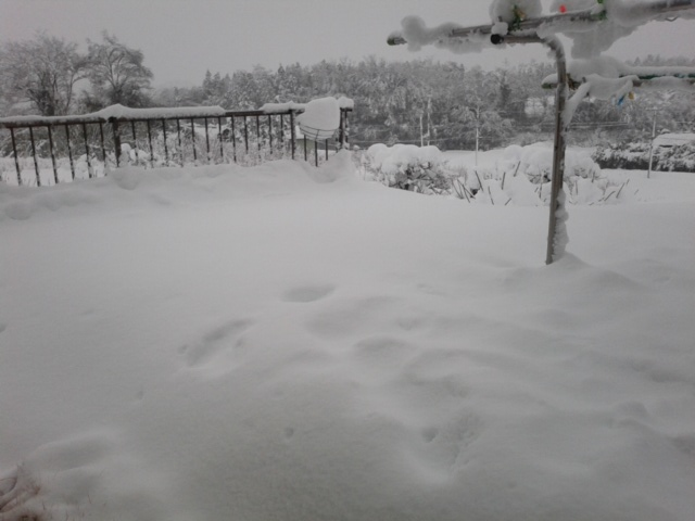 雪20140215