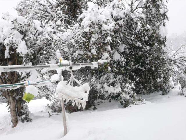雪20140215木