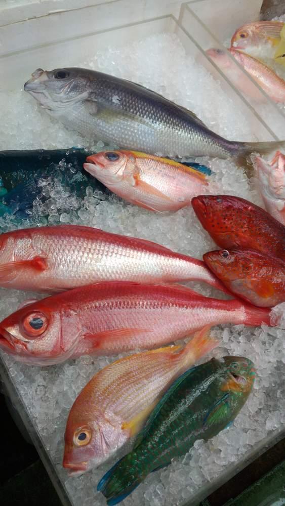 DSC_0037 カラフル魚1