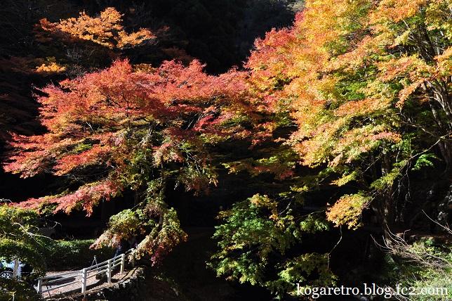 2014蓬莱山の紅葉3