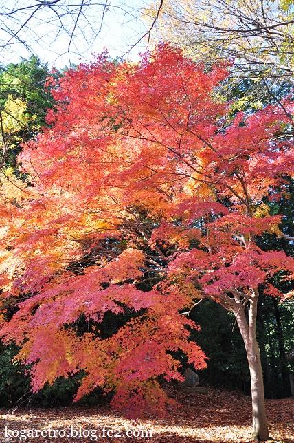 2014太平山の紅葉4
