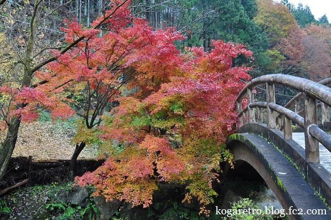 出流ふれあいの森の紅葉